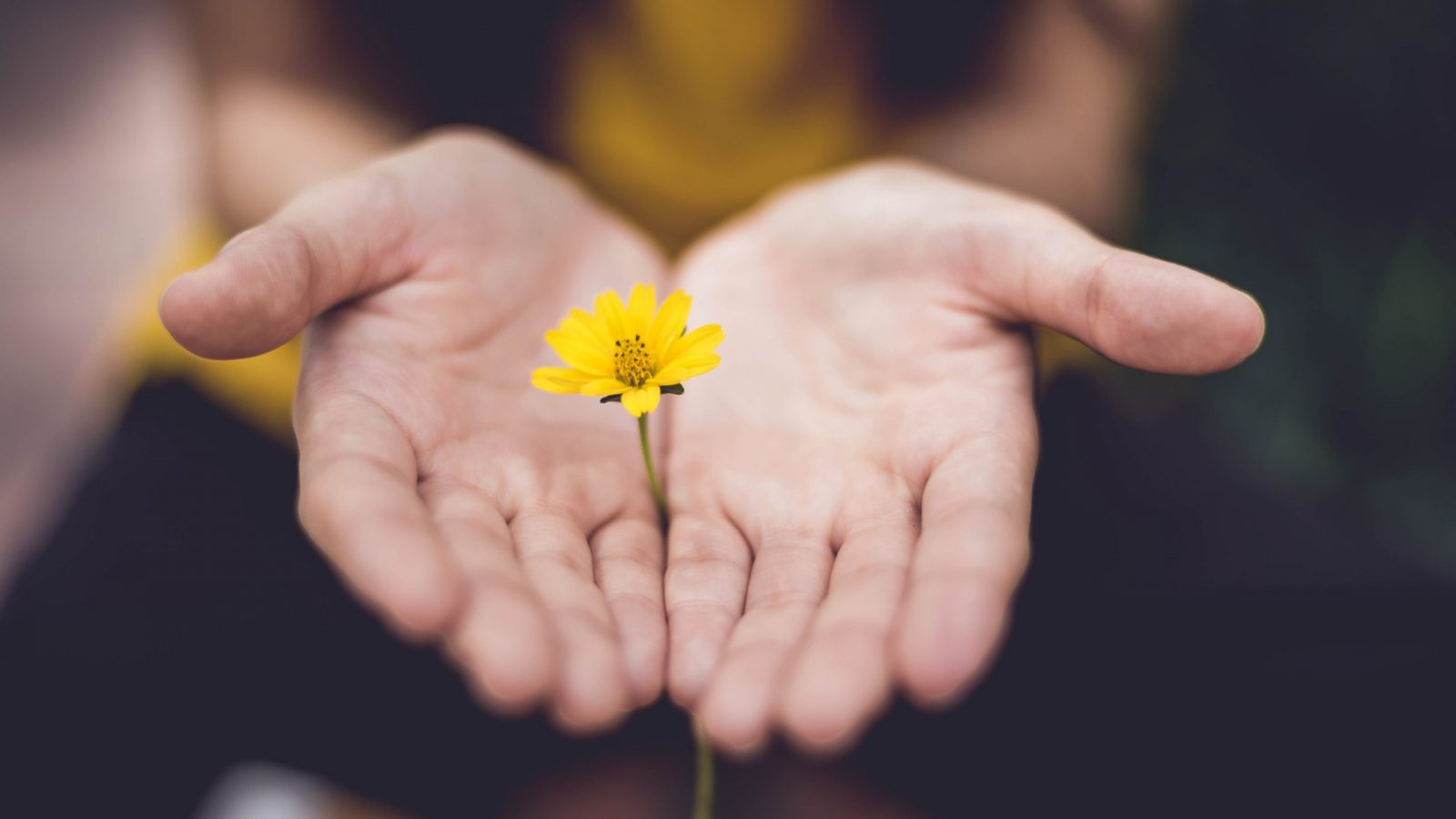 Hands holding a flower.